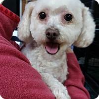 Adopt A Pet :: Noel - Salem, OR