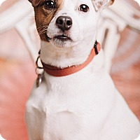 Adopt A Pet :: Pepito - Portland, OR