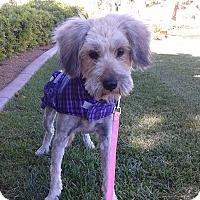 Adopt A Pet :: Sara - Las Vegas, NV