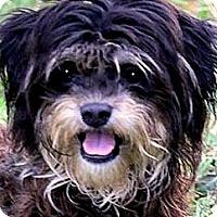 Adopt A Pet :: LENNY(ADORABLE 'TINY