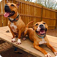 Adopt A Pet :: Braveheart (F) and Wombat (M) - O'Fallon, MO