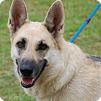 Adopt A Pet :: Layla AD 05-27-16 - Preston, CT