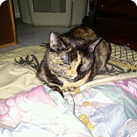 Adopt A Pet :: Snickers - Seminole, FL