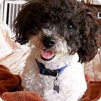 Adopt A Pet :: O & Duchess (m&f) VIDEO - Los Angeles, CA