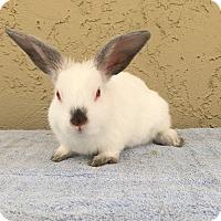 Adopt A Pet :: Tofu - Bonita, CA