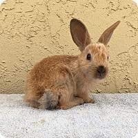 Adopt A Pet :: Wonton - Bonita, CA