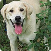 Adopt A Pet :: Aspen - Kyle, TX