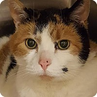 Adopt A Pet :: Marilyn - Worcester, MA