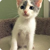 Adopt A Pet :: Atreyu - Irvine, CA
