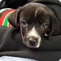 Adopt A Pet :: Marty - Sugar Grove, IL