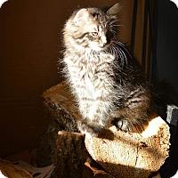 Adopt A Pet :: Theodore - Laval, QC