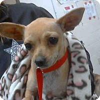 Adopt A Pet :: CANDY - Conroe, TX