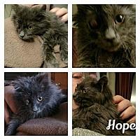 Adopt A Pet :: Hope - Toms River, NJ
