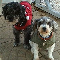 Adopt A Pet :: Suzie & Rosebud - Jacksonville, FL