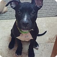 Adopt A Pet :: Daisy - Las Vegas, NV