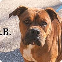 Adopt A Pet :: L.B. - Oak Ridge, TN