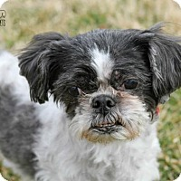 Adopt A Pet :: Tink - Troy, IL