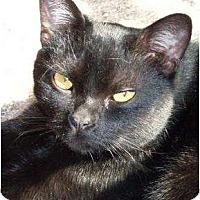 Adopt A Pet :: Yoda - Lilburn, GA