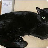 Adopt A Pet :: Nora - Colmar, PA