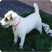 Adopt A Pet :: PATCH III - Scottsdale, AZ