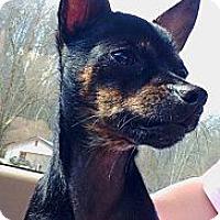 Adopt A Pet :: Porkchop - Hazard, KY