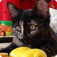 Adopt A Pet :: Baby - Chandler, AZ