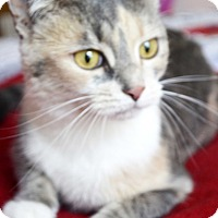 Adopt A Pet :: Buffy - Xenia, OH