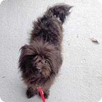 Adopt A Pet :: PIA - Melbourne, FL