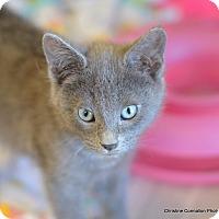 Adopt A Pet :: Mario - Island Park, NY