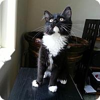 Adopt A Pet :: 2978 Tippie - CO - Council Bluffs, IA