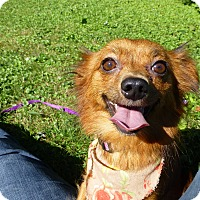 Adopt A Pet :: Ginger - Wyanet, IL