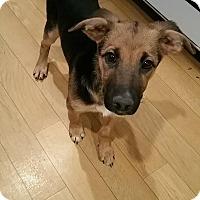 Adopt A Pet :: Venus - Greeneville, TN