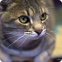 Adopt A Pet :: Kevin - Tucson, AZ