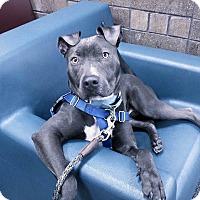 Adopt A Pet :: Penelope - Villa Park, IL