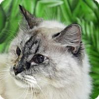 Adopt A Pet :: Iris - Englewood, FL