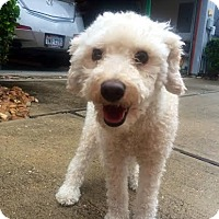 Adopt A Pet :: Cooper - Boston, MA