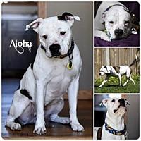 Adopt A Pet :: Aloha - Sioux Falls, SD