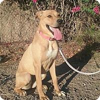 Adopt A Pet :: Athina - Mesa, AZ
