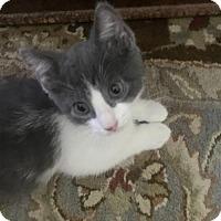 Adopt A Pet :: Tippy - Plain City, OH