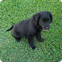 Adopt A Pet :: Matilda - Sussex, NJ