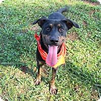 Adopt A Pet :: GUNTER - Lexington, NC