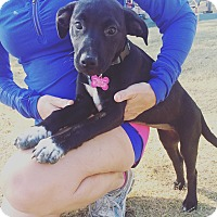 Adopt A Pet :: Sox - Greenfield, WI