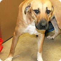 Adopt A Pet :: Grute - Irving, TX