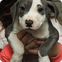 Adopt A Pet :: Norris - Fort Madison, IA
