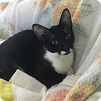 Adopt A Pet :: Audrey - Tampa, FL