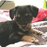 Adopt A Pet :: Tina - Tijeras, NM