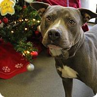 Adopt A Pet :: Dylan - Greensboro, NC