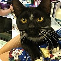 Adopt A Pet :: Gus Gus - Richboro, PA