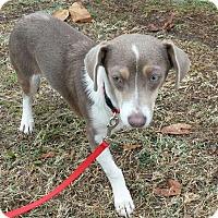 Adopt A Pet :: MOCHA-ADOPTED - Cranston, RI