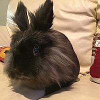 Adopt A Pet :: Kicky - Los Angeles, CA